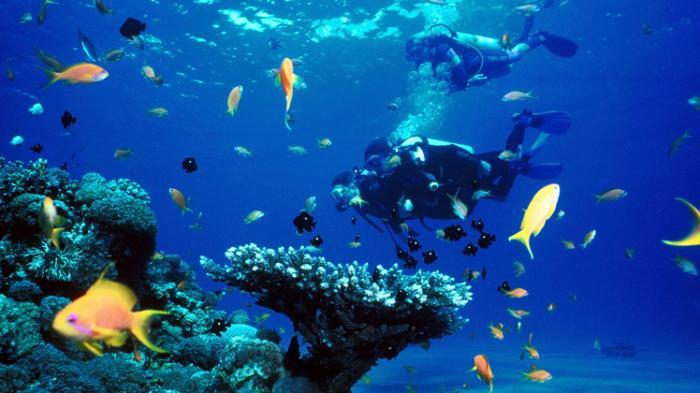 Kekayaan ikan perairan Wakatobi. Nelayan Wakatobi lakukan konservasi area penangkapan perikanan (dok. kkp.go.id)