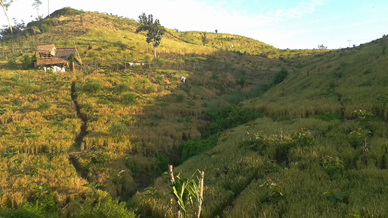 Pertanian di lahan kering (dok. pertanian.go.id)