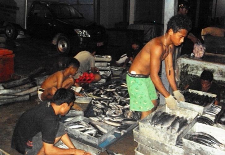 Tempat pelelangan ikan. Susi dorong nelayan kembangkan perikanan tangkap (dok. Kiara)