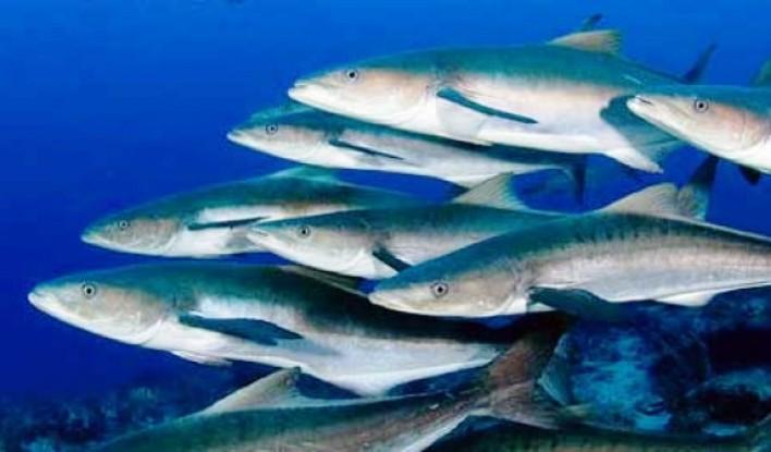 Keanekaragaman jenis ikan di Indonesia (dok. kkp.go.id)