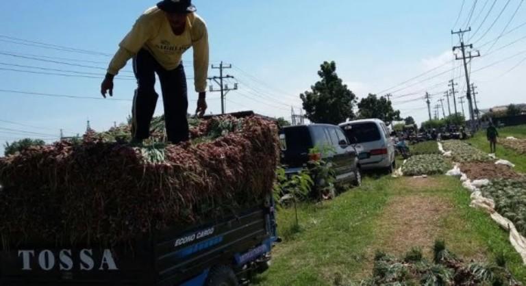 Petani mengangkut bawang merah hasil panen (dok. pertanian.go.id)