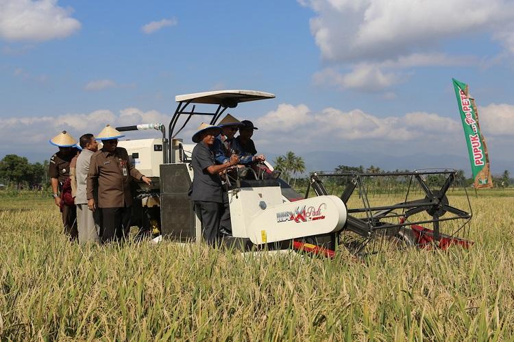 Prosesi panen raya padi di Sulawesi Selatan tahun 2014 silam (dok. pertanian.go.id)