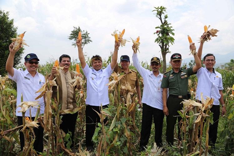 Prosesi panen jagung oleh pejabat Kementan di Kabupaten Bandung, Jawa Barat (dok. pertanian.go.id)
