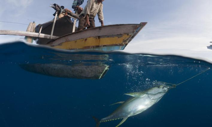 Nelayan menangkap ikan tuna (dok. worldwildlife.org)