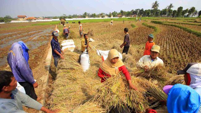 Petani memanen padi. Komisi IV DPR akan mengawal pembentukan Badan Pangan (dok. bantenprov.go.id)
