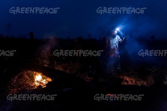 Investigator Greenpeace mengambil data koordinat GPS pada lahan gambut yang menjadi habitat orangutan yang baru saja dibakar untuk ditanami sawit di Ketapang, Kalimantan Barat (dok. greenpeace/ulet ifasanti)