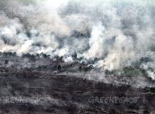 Lahan gambut yang terbakar di sebuah area konsesi gambut di Pangkalan Terap, Teluk Meranti, Pelalawan, Riau (dok. greenpeace/rony muharrman)