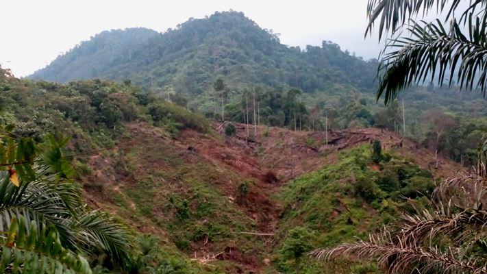 Kerusakan hutan di Aceh akibat perkebunan sawit (dok. program setapak)