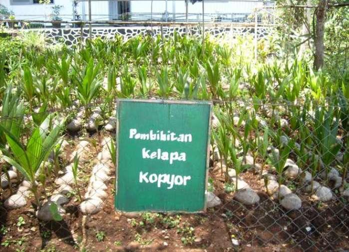 Kebun pembibitan kelapa kopyor, Pati, Jawa Tengah (dok. patikab.go.id)