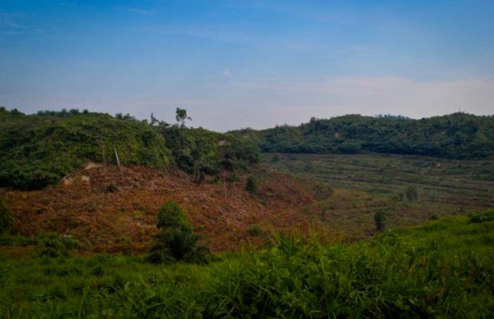 Kerusakan hutan d Aceh (dok. mataaceh.org)