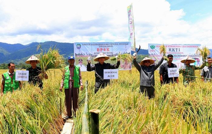 Prosesi panen padi di Blangpidi, Aceh (dok. acehprov.go.id)