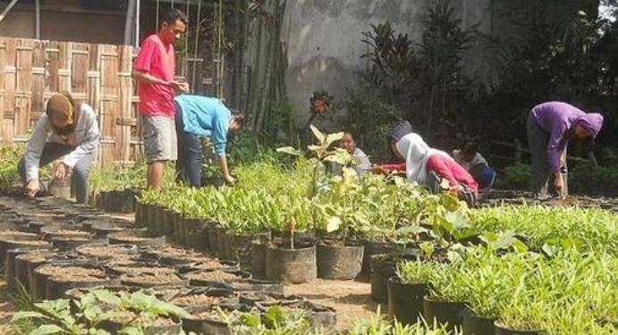 Praktik menyemai bibit sayuran organik (dok. malangkota.go.id)