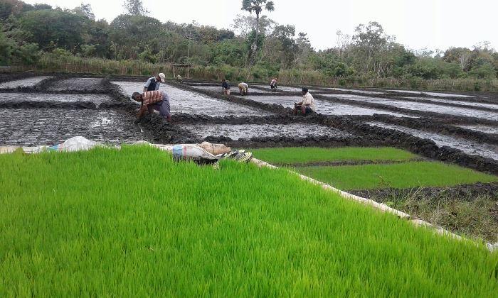 Petani menerapkan sistem pertanan ramah lingkungan di Sumba Timur, Nusa Tenggara Timur (dok. villagerspost.com/rahmat adinata)