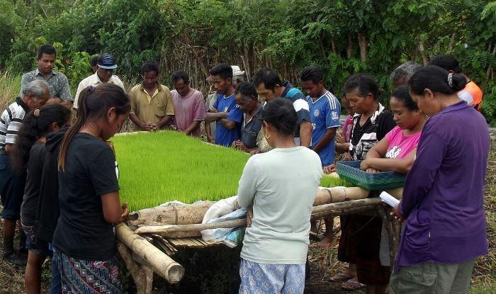 Kelompok tani Pro Iklim Desa Tamma, berdoa sebelum mulai menanam (dok. villagerspost.com/rahmat adinata)