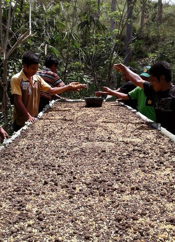 Menyemai benih padi dengan pola System of Rice Intensification (dok. villagerspost.com/rahmat adinata)