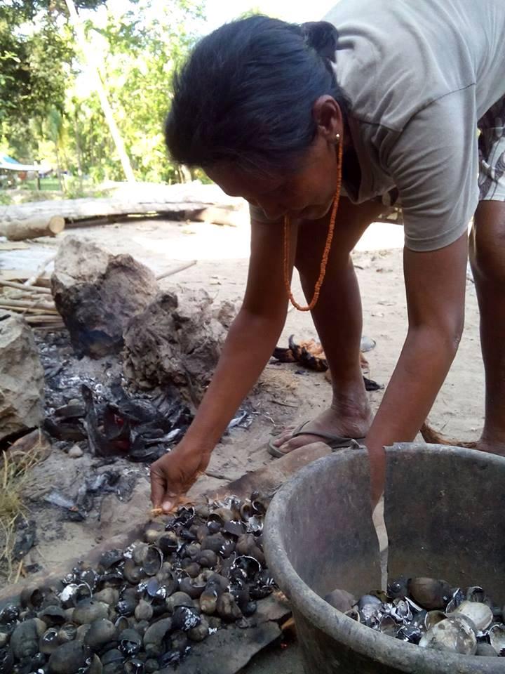 Membangkar cangkang keong mas untuk dijadikan tepung tulang (dok. villagerspost.com/rahmat adinata)
