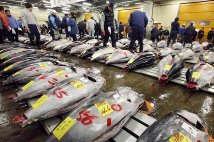 Ikan tuna di pasar Jepang yang sebagian dipasok dari Indonesia (dok. kkp.go.id)