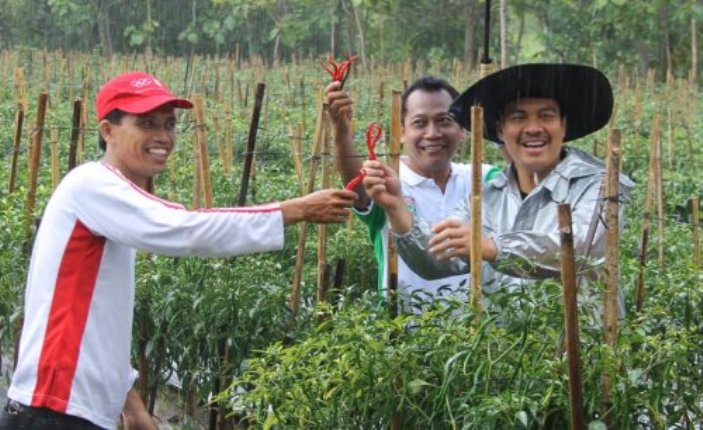 Pemanfaatan lahan tidur untuk menanam cabai di Kulon Progo, Yogyakarta (dok. kabupaten kulon progo)