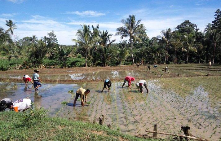 Petani menghadapi ancaman perdagangan bebas (dok. bina desa)