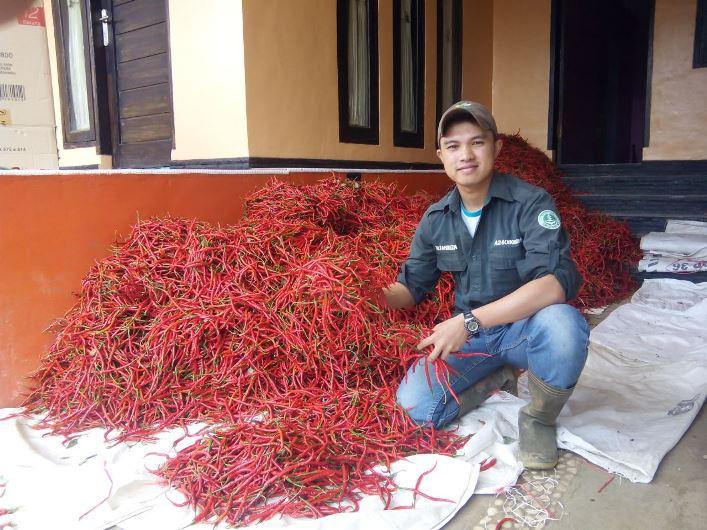Rizal Fahreza dengan cabai hasil panen dari kebunnya (dok. rizal fahreza)