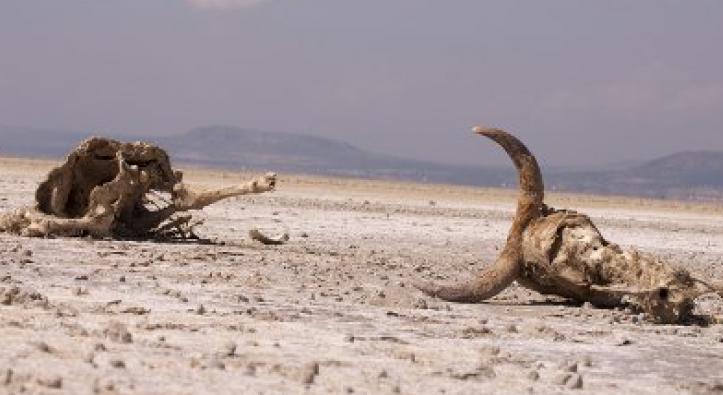 Kekeringan parah di Ethiopia sebagai dampak perubahan iklim (dok. oxfam)