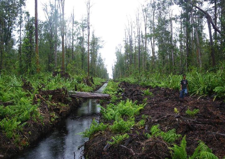 Kawasan hutan gambut di Aceh terancam rusak akibat ekspansi lahan sawit (dok. tfca sumatera)