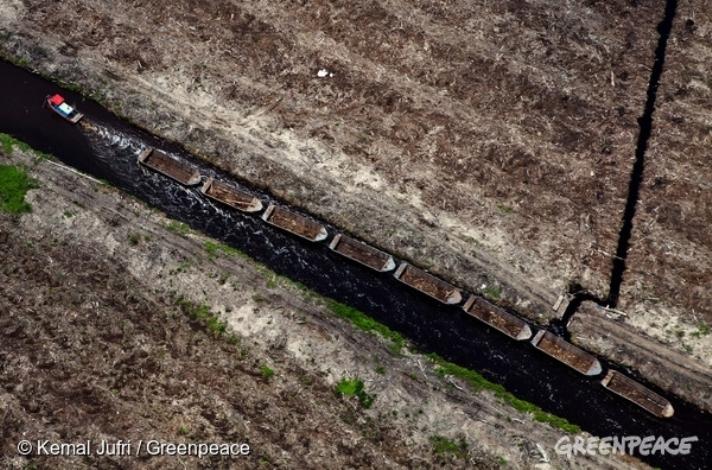 Kerusakan lahan gambut (dok. greenpeace)