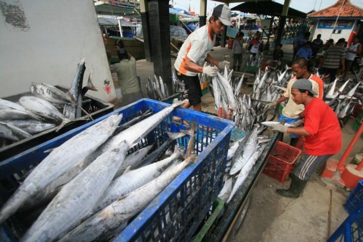 Produk ikan hasil tangkapan nelayan (dok. kementerian kelautan dan perikanan)