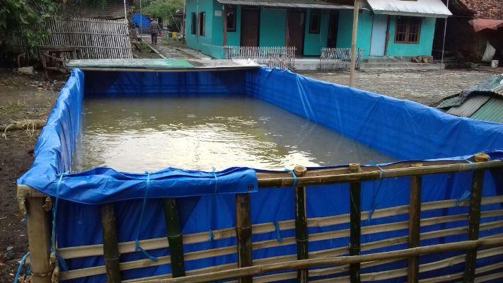 Memanfaatkan pekarangan untuk budidaya lele kola terpal (dok. villagerspost.com/tim jurnalis desa kalensari)