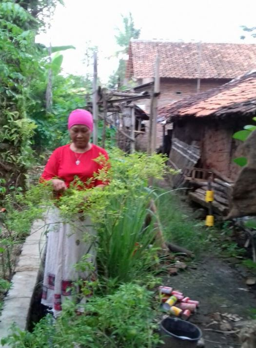 Memanfaatkan pekarangan sempit untuk menanam cabai (dok. villagerspost.com/tim jurnalis desa kalensari)