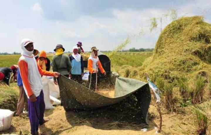 Panen padi di Subang, Jawa Barat (dok. jabarprov.go.id)
