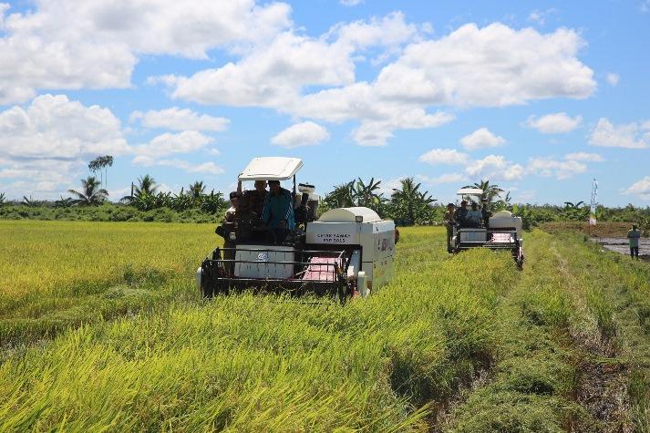 Prosesi panen raya padi di Merauke (dok. kementerian pertanian)
