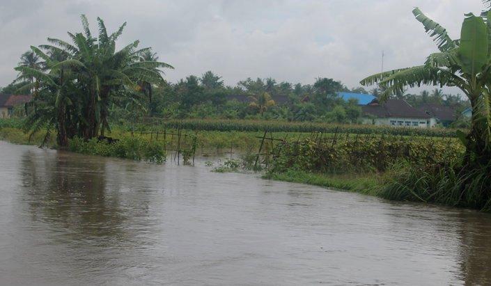 Sawah terendam banjir di Bantul, Yogyakarta (dok. pemkab bantul)