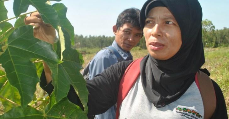 """Siti Maimunah bersama mahasiswanya Kristianto Okoiiko, memeriksa kondisi tanaman """"'kemiri sunan"""" atau Reutealis trisperma (dok. cifor)"""