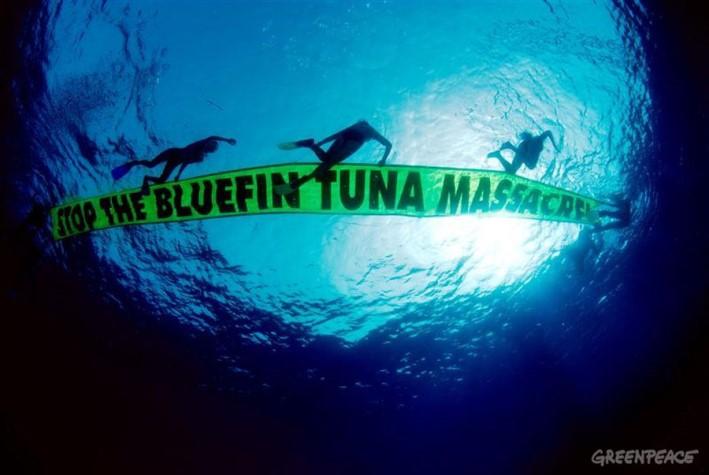 Aksi Greenpeace menentang penangkapan tuna secara merusak (dok. greenpeace)