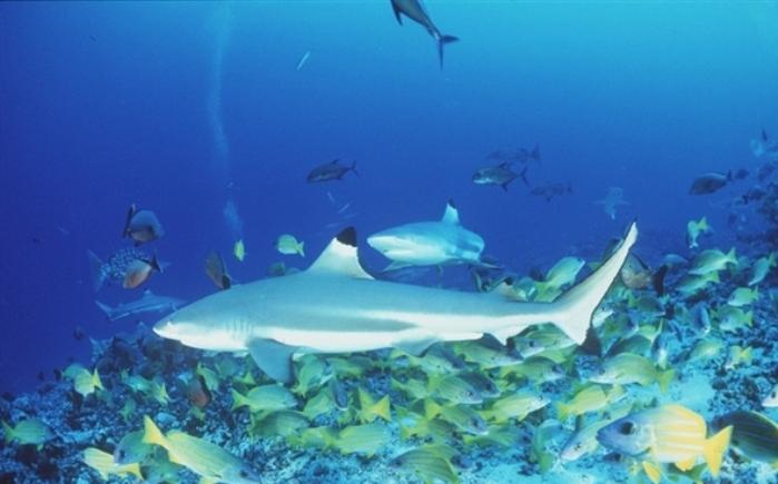 Terumbu karang dan keanekaragaman hayati di laut (dok. greenpeace)