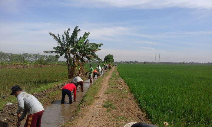 Sejak pagi menjelang, ratusan warga sudah datang dan mulai mengerjakan perbaikan saluran irigasi tersier Desa Kalensari (dok. villagerspost.com/tim jurnalis desa kalensari)