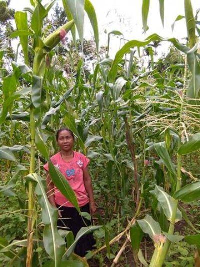 Theresia Loda, anggota kelompok tani Kasih Mila, di lahan jagung milik kelompok (dok. villagerspost.com/rahmat adinata)