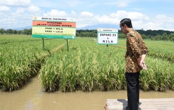 Presiden Jokowi meninjau lahan minapadi dengan sistem tanam jajar legowo (dok. presiden ri)