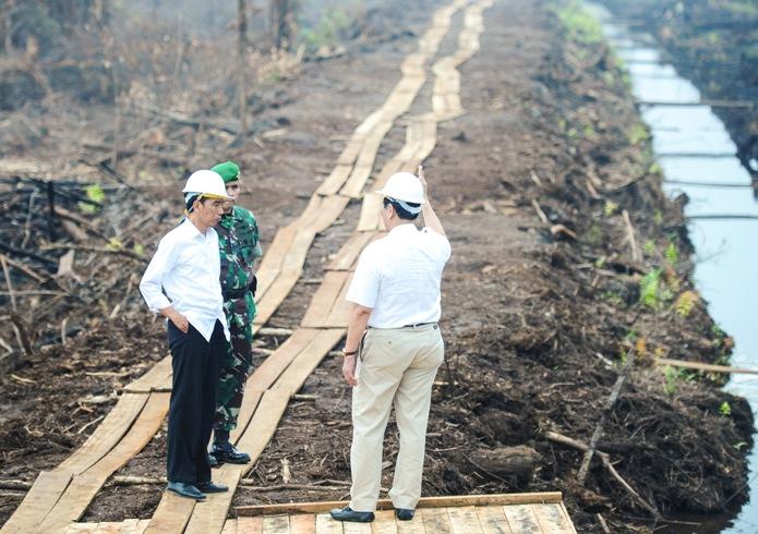 Presdien Jokowi meninjau pembuatan sekat kanal gambut untuk mencegah kebakaran hutan (dok. kantor staf presiden)