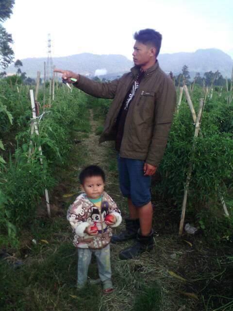 Budi Kusmawan di kebun sayuran miliknya. Dia melakukan sistem tumpang sari agar tak merugi ketika harga tomat jatuh (dok. villagerspost.com/rahmat adinata)
