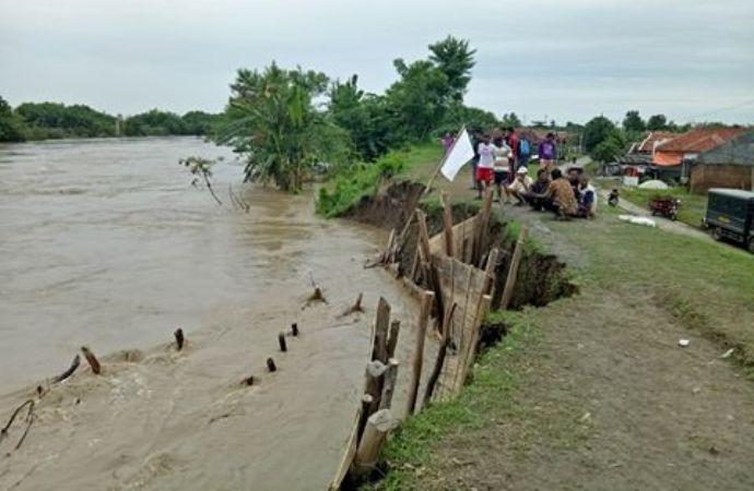 Luapan dan arus deras sungai Pemali ikut menggerus tanggul sepanjang 5 kilometer (dok. villagerspost.com/bangkit nugroho sylendra)