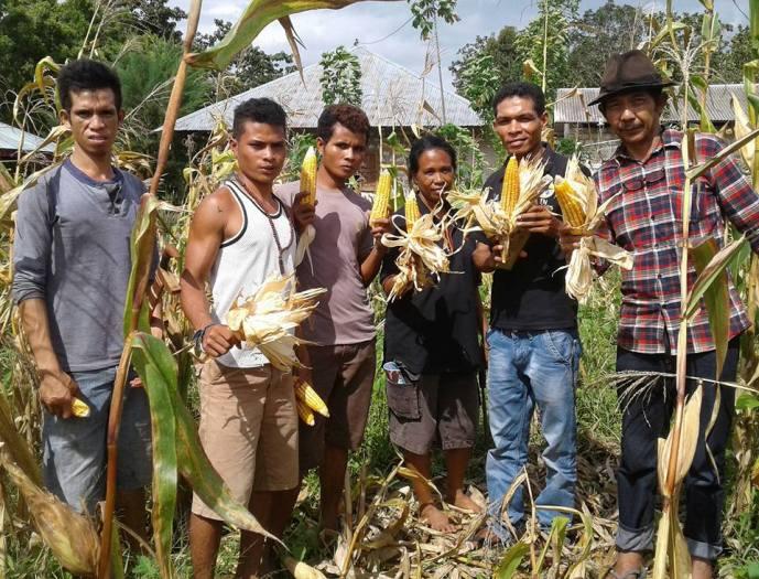 Anggota Kelompok Tani  Pamoru Tana, Desa Watukawula bangga memamerkan jagung lokal hasil panen (dok. villagerspost.com/rahmat adinata)