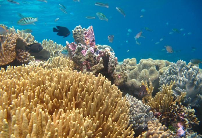Kekayaan hayati laut Papua (dok. wwf)