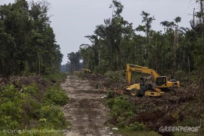 Perusakan hutan untuk perkebunan sawit (dok. greenpeace)