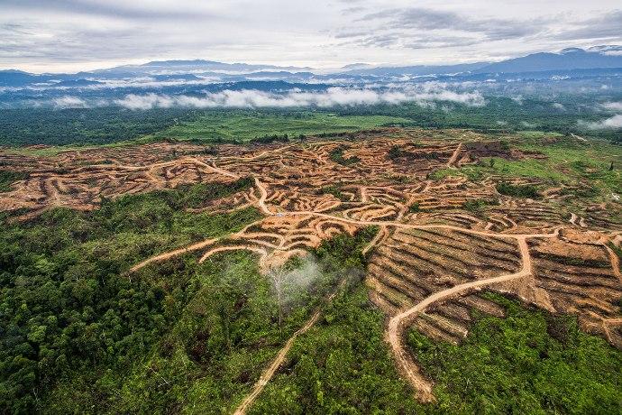 Foto pembukaan lahan oleh PT. Agra Bumi Niaga. Desa Peunaron. Aceh Timur, Indonesia (dok. RAN/Nanang Sujana)