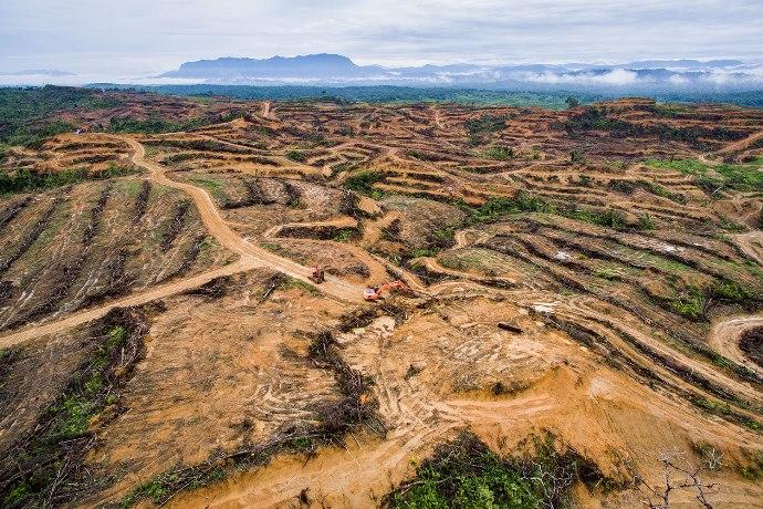 embukaan lahan oleh PT. Agra Bumi Niaga untuk dijadikan perkebunan kelapa sawit di Desa Peunaron, Aceh Timur, Indonesia. (dok. RAN/Nanang Sujana)
