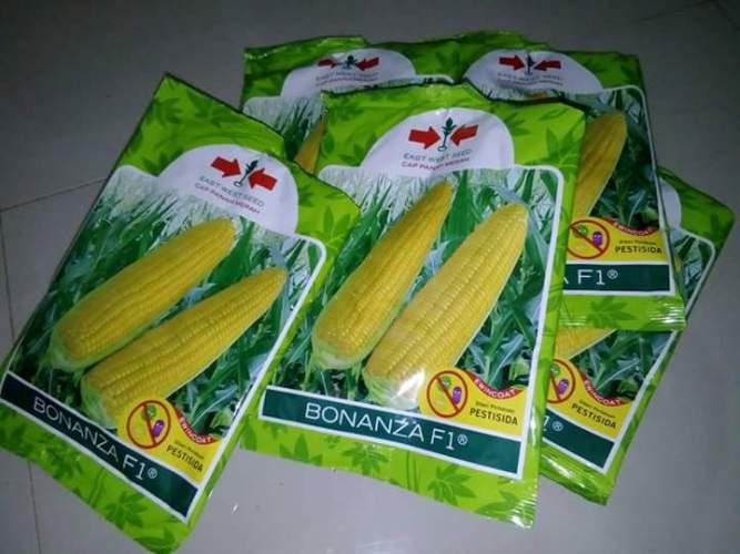Bibit jagung manis yang umum ditanam petani Lampung Tengah (dok. villagerspost.com/nanang susanto)