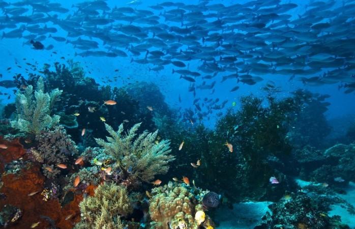 Kawasan terumbu karang Raja Ampat, Papua Barat (dok. greenpeace)